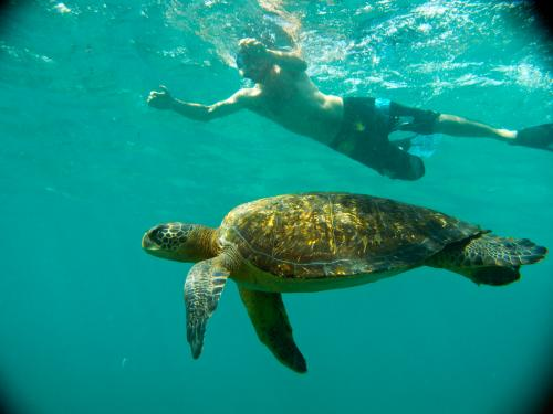 Swimming With Turtles in the Galapagos Islands